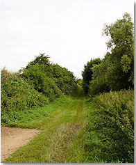 Sunken Lane near Beaumont-Hamel